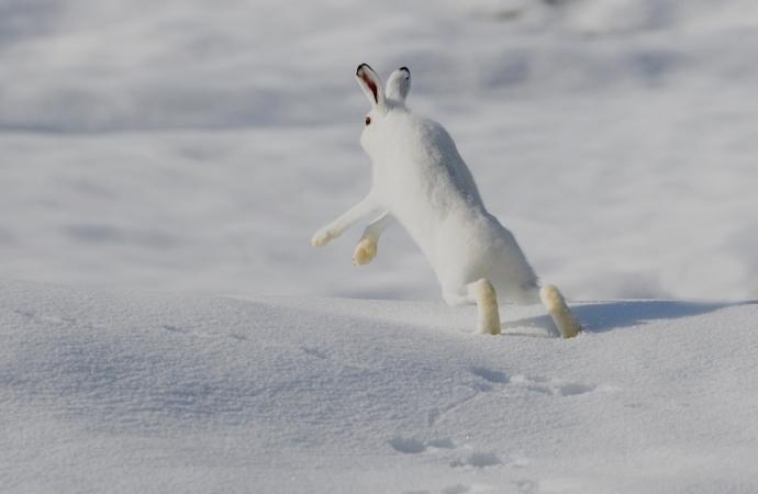 Languore d'inverno: nel mondo di un solo colore il suono del vento - Matsuo Bashoottile tra buio e buio - John Updike