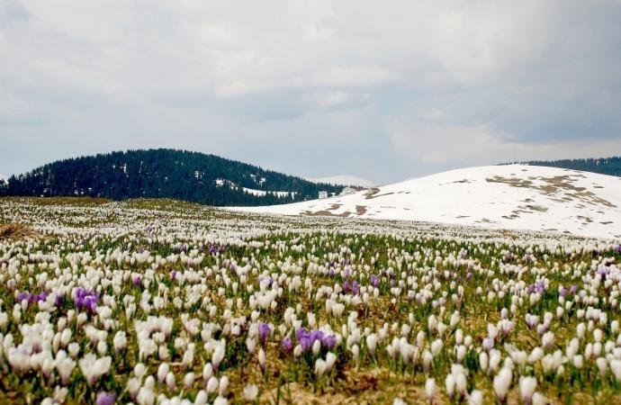 La primavera torna, le nevi dell'inverno si sciolgono e la loro acqua ci infonde nuova energia - Paulo Coelho