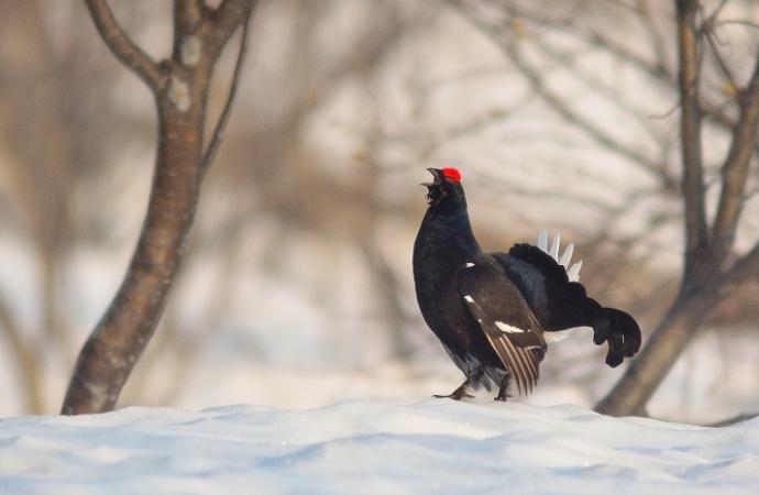 Se sentiamo il canto di un cardellino, è primavera anche se il giorno dopo nevica - Mario Rigoni Stern