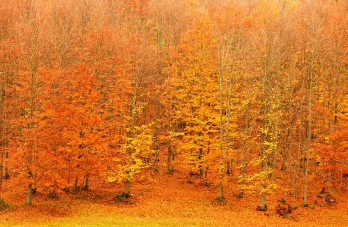 Di tutte le stagioni, l'autunno è quella che offre di più all'uomo e chiede di meno - Hal Borland